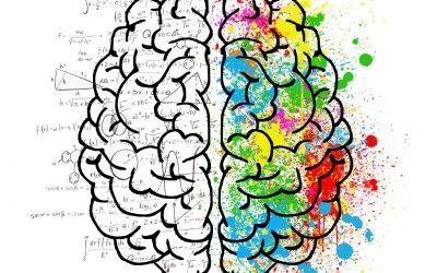 Ça donnerait quoi si on prenait des cours de cerveau ?